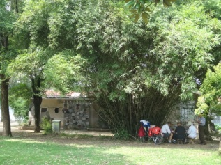 Locals playing cards under the tree at Linghu Park